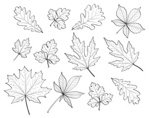 leaves silhouettes