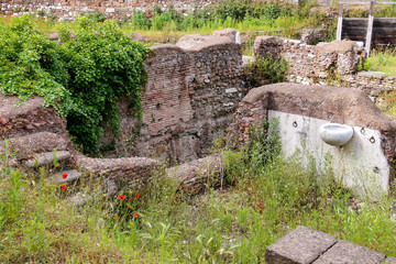 Red poppies on excavations in the historic part of Rome, Italy