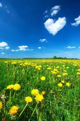 Dandelion field with heart shaped cloud