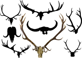 collection of eight isolated antler and horns