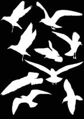 set of nine gull white silhouettes