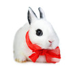 Small beautiful rabbit with  red ribbon
