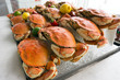 Dungeness crab - 69710842