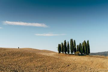 Cipressi Val D'Orcia - Toscana