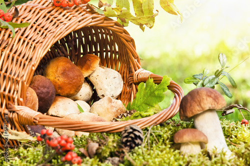 Basket with mushrooms - 69713871