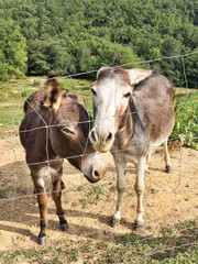 Two beautiful donkey friends, close together