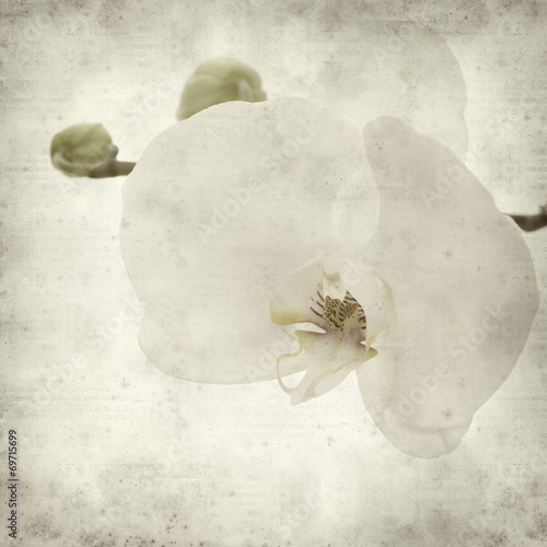 textured old paper background © Tamara Kulikova