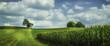 Leinwanddruck Bild - Summer Field