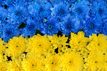 Blue and yellow stripes with colored flowers (Ukraine flag, the