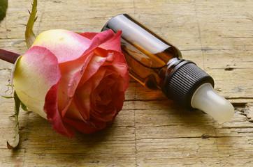 Rossläktet Rosa Rose Rosen Rosier Róża Шиповник Gül