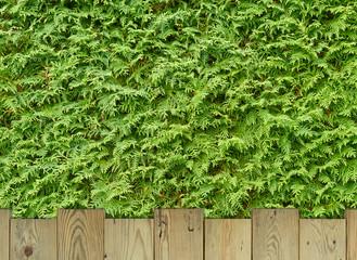 Holzplanken vor grüner Hecke