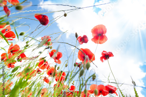 Foto op Canvas Klaprozen Poppy flowers wide angle