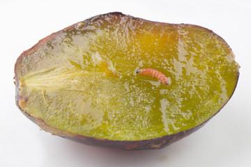 Plum fruit moth - Cydia funebrana - on a plum