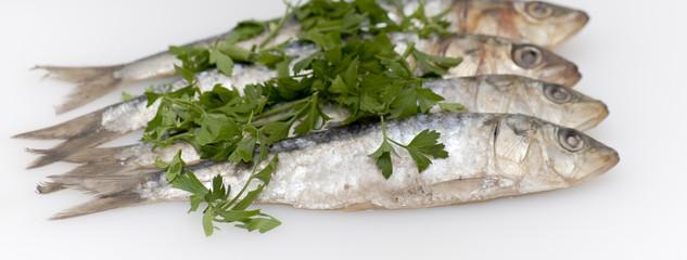 Fresh sardines with parsley leaves
