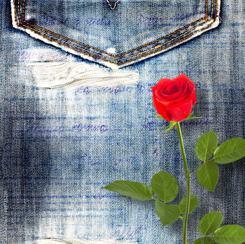 Beautiful red rose on old jeans background © Loraliu