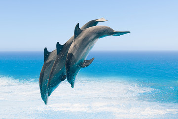 group of jumping dolphins, blue sea background