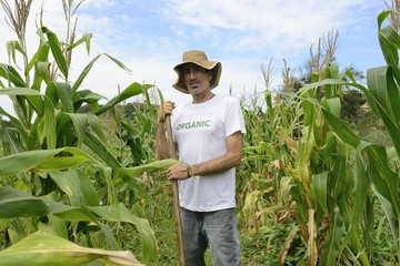 Organic farmer showing corn inside the plantation