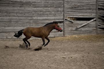 Лошадь в движении