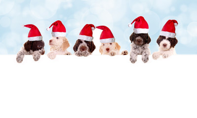 Hundewelpen mit Nikolausmützen