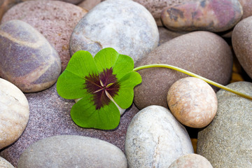 vierblättriges Kleeblatt auf Steinen