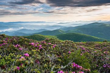 Southern Appalachian Roan Highlands
