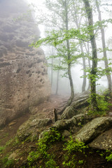 Лес кубани