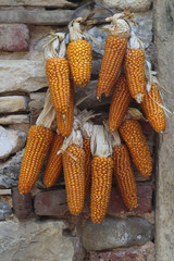 ear of corn on a stone wall