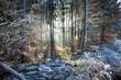 canvas print picture - Sonnenstrahlen und Frost