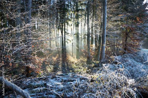 canvas print picture Sonnenstrahlen und Frost