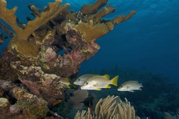 Underwater Reef fish