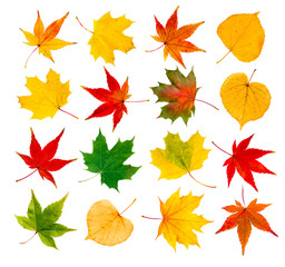 bunte Blätter vor weißem Hintergrund als Collage