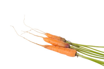 three fresh carrots with roots isolated on white background