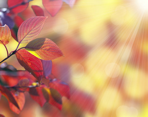 Autumn many-coloured leaves