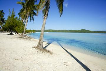 Tropical island resort, palms, sea and sand.