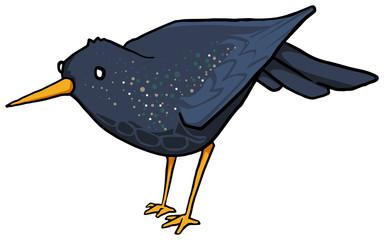Little black bird, Common starling
