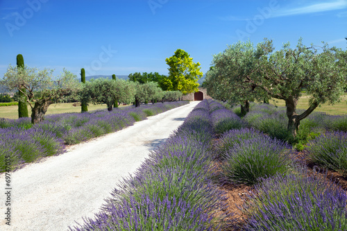 The ground road to farm in Provence, France - 69747035