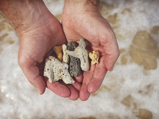 Mans hands holding broken coral in the sea