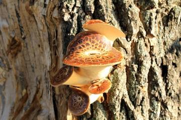 Mushrooms growing on tree