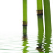 bamboo reflecting on the water surface
