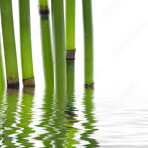In de dag Bamboo bamboo reflecting on the water surface