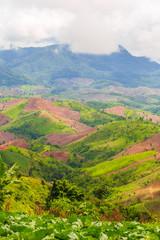 Deforestation for highland agriculture