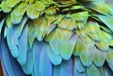 Fototapety Macaw feathers