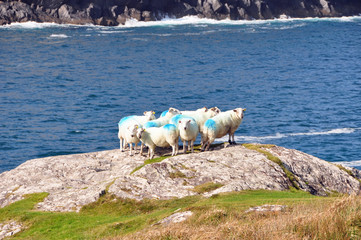 Gruppe Schafe