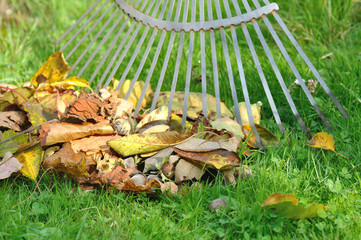 feuilles mortes et râteau