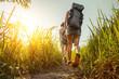 Leinwanddruck Bild - Hikers