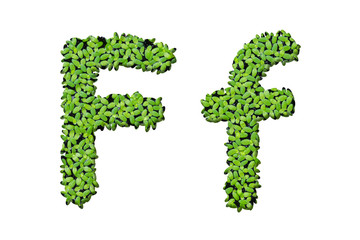 "Duckweed alphabet letters ""F"" isolated on white background"