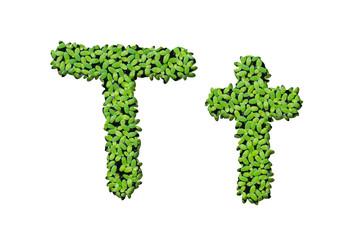 "Duckweed alphabet letters ""T"" isolated on white background"