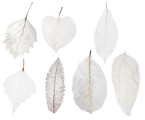 set of seven light leaf skeleton isolated on white