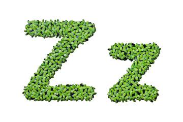 "Duckweed alphabet letters ""Z"" isolated on white background"
