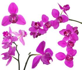 set of three petals pink orchids